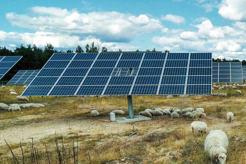 NEF-Feldheim-Photovoltaik-1015.jpg